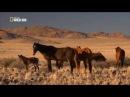 Дикий Запад Африки Жеребцы пустыни Намиб