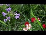 Ботанический сад имени академика А.В. Фомина, часть 2