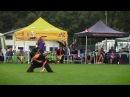 Adrian Stoica RORY: UFO 2016 European Champions (DISC DOG, freestyle)