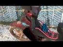 Viper active -125 cm3 Заводим мопед в -10 градусов Musstang