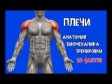 ПЛЕЧИ. 10 Фактов. Тренировки, Биомеханика, Анатомия.
