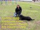 гиперактивная собака основные моменты