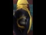 Отправка Nike Kyrie 'Mamba Mentality'