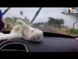 Котенок пытается поймать автомобильный дворник
