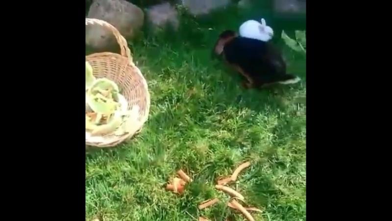 Наш маленький контактный зоопарк на дне рождении!!🐇🐇💜💜
