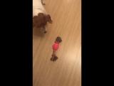 Настя Задорожная и ее собаки