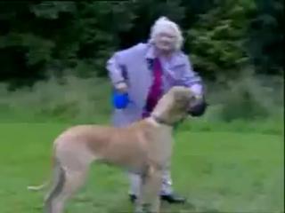 Прикол с бабкой и собакой!