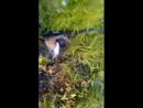 Дункан охота на утку.