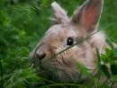 Кролик Боня гуляет на природе, август 2017