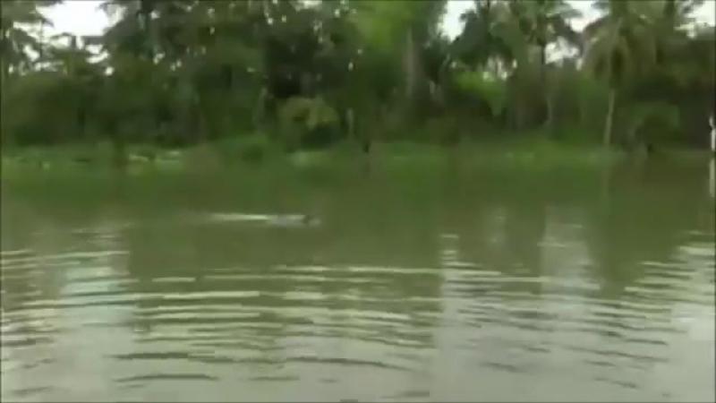 НРС в реке Брунея