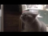 """""""Открой мне!"""" -  говорит кот Яков"""