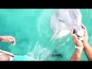 Дельфин-спасатель