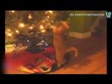 Коты против новогодних ёлок