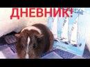 Дневник моих свинок/SvinkiStar