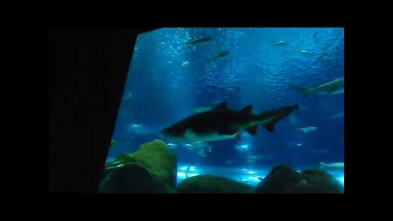 Aqua Rio17 Shark