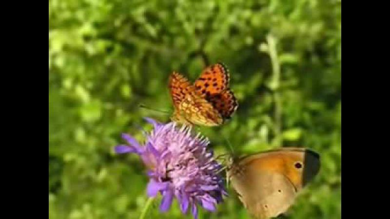 Vals de las Mariposas -Dany Daniel