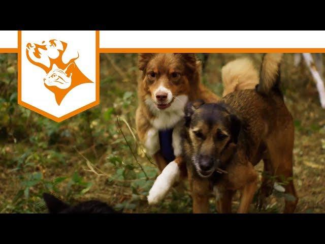 Einfach Hund Folge 1: Das sind wir! - Ernährungsberater für das Futter Deines Hundes | Vet-Concept