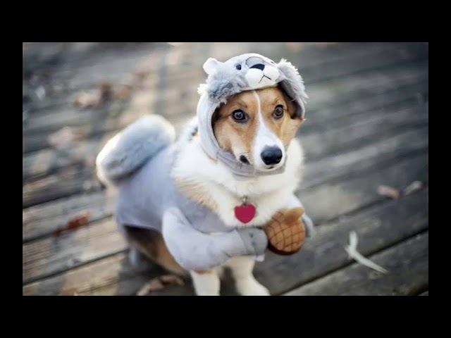 Я ебу собак Песня