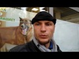 Выставка бродячих собак СПб