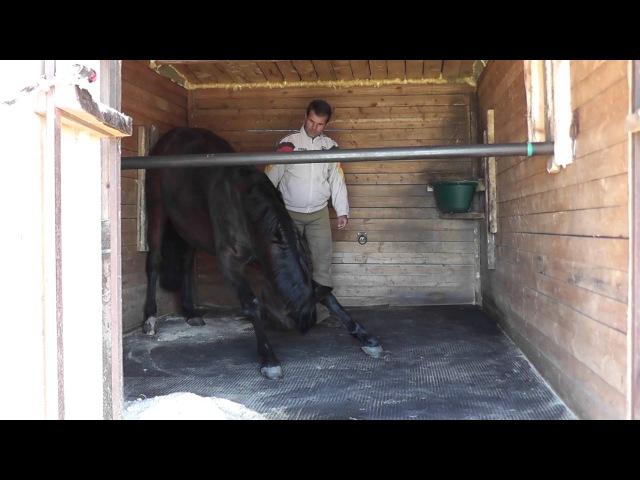 Умственная гимнастика лошади