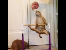 Отличная мотивация для тренировок)))