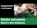 Stories and poems Alberto's New Neighbours Суфлёр аудирование по английскому языку