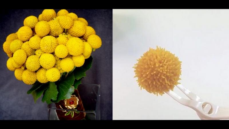 Цветок - Краспедия шаровидная. Кондитерская насадка № 233