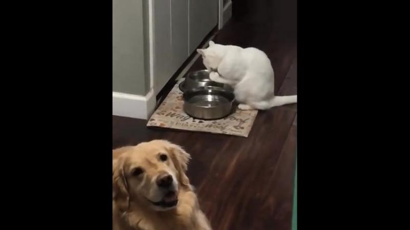 а как пьют ваши кошки