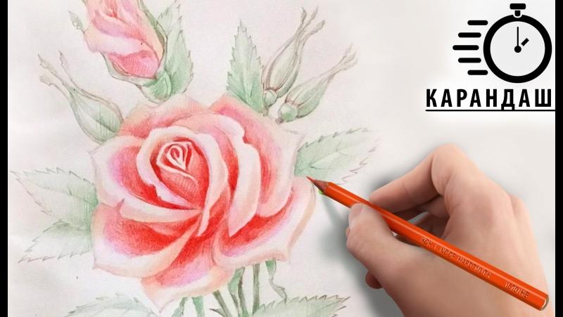 Карандаш РИСУНОК Роза! ТАЙМЛАПС! Выбери свой урок рисования. Уроки для начинающих карандашом!
