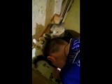 как кошка лижет мне голову