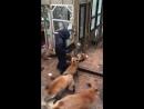 Покормить лисичку не желаете