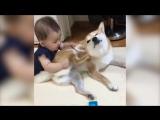 ОСТОРОЖНО! Опасный уровень УМИЛЕНИЯ подборка детей и животных - 5 минут для хорошего настроения