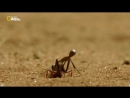 Incredible Insects 720p