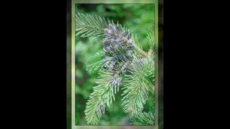 Essential OilsThe Most Potent Plant Healing Substances Available!