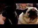 Собака зовёт Бэтмена #coub