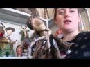 Авторские куклы Оли Дошиной Моя коллекция!! dolls /Olya Дошина dolls