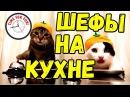 Лучшие приколы С ЖИВОТНЫМИ 2017🔥Подборка 💥 Декабрь 10 Еноты, Собаки, Коты и Череп...