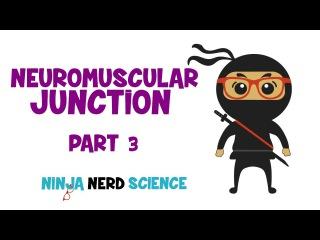 Myology: Neuromuscular Junction- Part 3