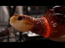 How They Made This Amazing glass Turtle