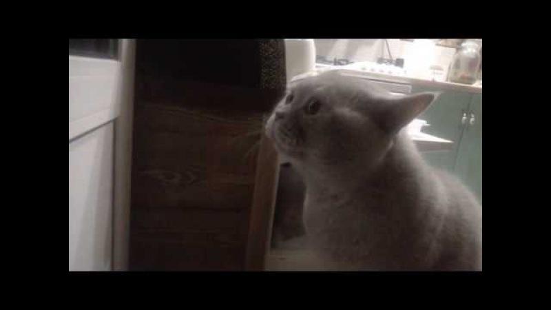 Открой мне!!, говорящий кот Яков