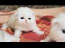 Cute Baby Cat UHD 4K Little Kittens かわいい子猫 140 Самые милые котята и котятки 2018 süße Kätzchen