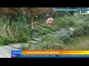 В Китае изобрели плащ-невидимку