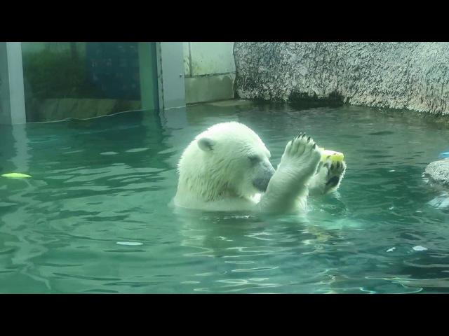 12 July 2017 Pororo at Tokushima zoo, Tokushima, Japan