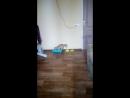 мой кот идиот
