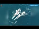 Киты и дельфины