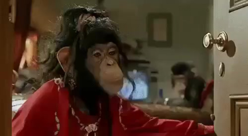 Hanım maymun