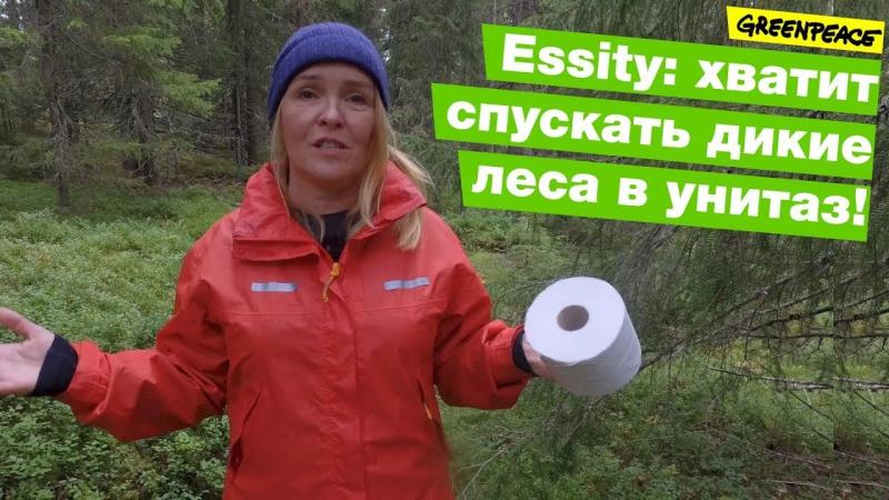 Essity: хватит спускать дикие леса в унитаз!