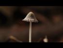Документальный фильм BBC Британские Времена Года Осень The Great British Year 4 Autumn 2013