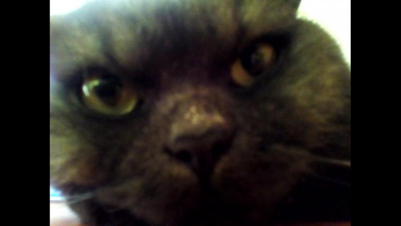 томас счастливый кот - мизантроп