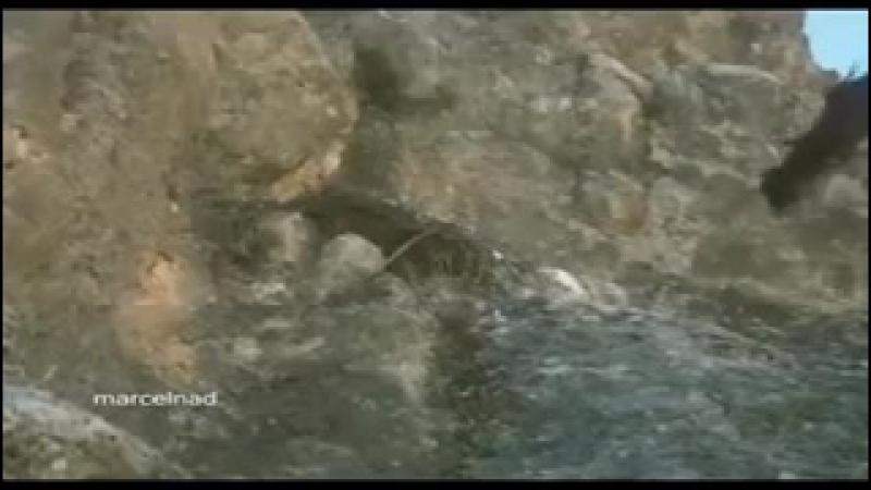 Көргенде арманда ! көрмегенде арманда ! (қасқыр және таутеке, елік аулаған қыран).240
